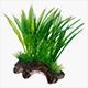 Rötter & Växter