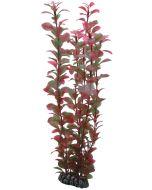 Frodig akvarieväxt för ett vacker inredning