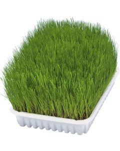 Extra mjukt kattgräs för kattungar