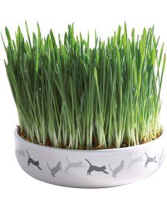 Keramikskål med färdigplanterad kattgräs