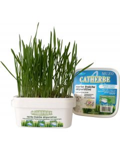 Tyrol Catherbe Kattgräs 220g. Vitaminrikt kattgräs i sålåda.