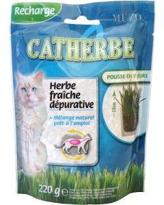 Tyrol Catherbe Kattgräs Refill. Vitaminrikt kattgräs i refill påse.