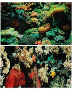 Bakgrundsplansch med vackra korallrev