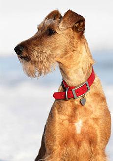 Halsband till alla hundar