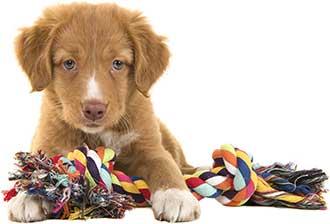 Leksaker till alla hundar