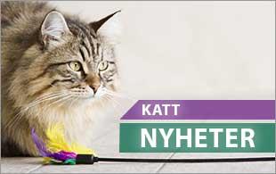 Nyhter till alla katter