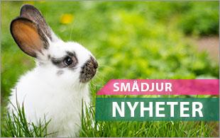 Nyheter till alla smådjur och kaniner