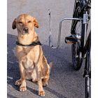 Säkert cykelfäste för hund.