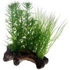 Dekorativ akvarieväxt med trärot