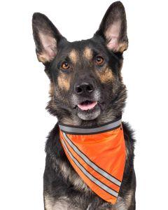 Självlysande hundscarf med reflexband