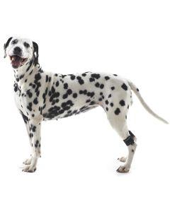 Benviktsmanschetter som tränar upp hundens muskelstyrka