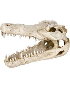 Detaljrikt kranium från krokodil