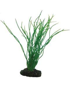 Fint vattengräs med naturligt utseende