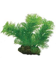 Vacker och grönskade akvarieväxt