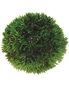 Växtboll för grönskande inredning i akvariet