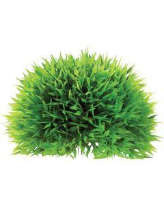 Vacker växtboll för akvarium