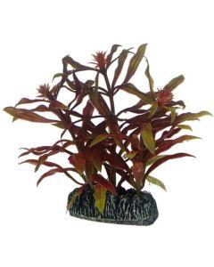 Frodig akvarieväxt med vackra blad