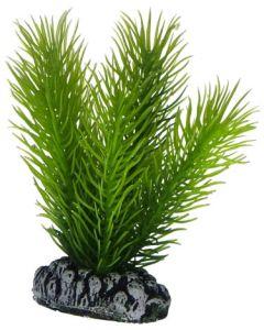 Vacker akvarieväxt med naturligt utseende