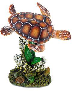 Simmande havssköldpadda i koraller