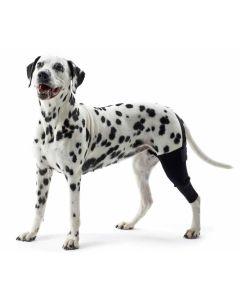 Knäledsskydd till hund som minskar smärta och förbättrar balansen