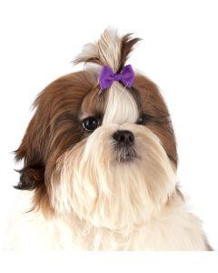 Show Tech Hair Bow Color 50-p. Hund rosett med gummisnodd.