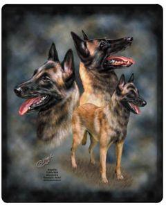 Fin musmatta med Belgisk vallhund