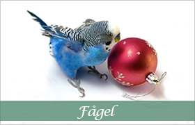 DjurMaxi julklappstips till alla sällskapsfåglar