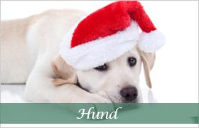 DjurMaxi julklappstips till alla hundar