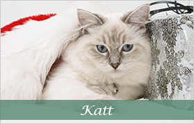 DjurMaxi julklappstips till alla katter