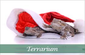 Julklappstips terrarium