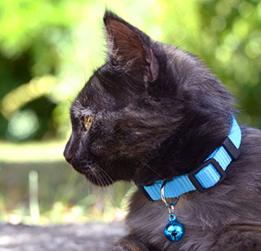 Halsband till alla katter