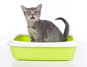 Kattlådor till billiga priser